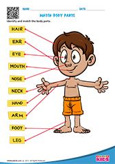 math worksheet : science body parts worksheets kindergarten : Kindergarten Body Parts Worksheet
