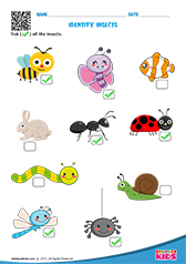 Free Printable Birds and Insects Worksheets for Pre-k ...