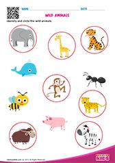 math worksheet : science wild animals worksheets kindergarten : Wild Animals Worksheets For Kindergarten