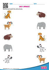 math worksheet : science wild animals worksheets kindergarten : Science Worksheets Kindergarten