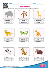 math worksheet : science wild animals worksheets kindergarten : Wild Animals Worksheets For Kindergarten