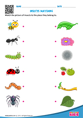 math worksheet : science insects worksheets kindergarten : Insect Worksheets For Kindergarten