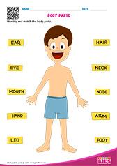 Printables Pre K Science Worksheets science body parts worksheets pre k parts